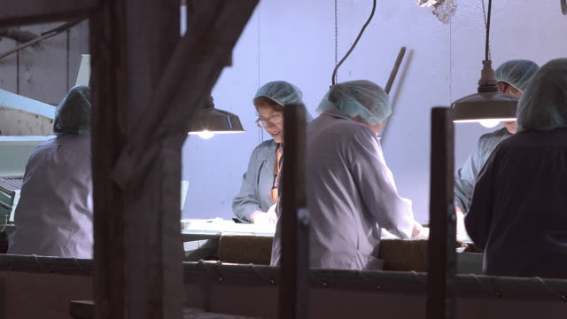 PAN across back side of women workers at food processing conveyor belt wearing hair nets and protective clothing  / Ontario, California, USA