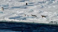 MS PAN across ice with Adélie penguins, Antarctica