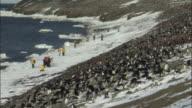 WS Adelie penguin (Pygoscelis adeliae) colony with tourists on beach / Devil Island, Antarctic Peninsula, Antarctica