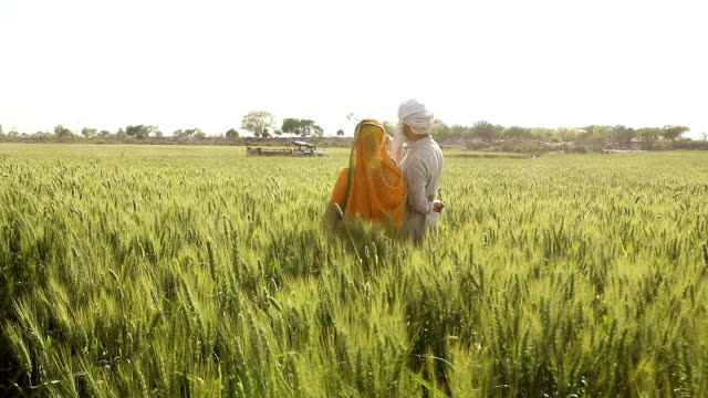 Adult man and adult woman talking in the farm, Haryana, India