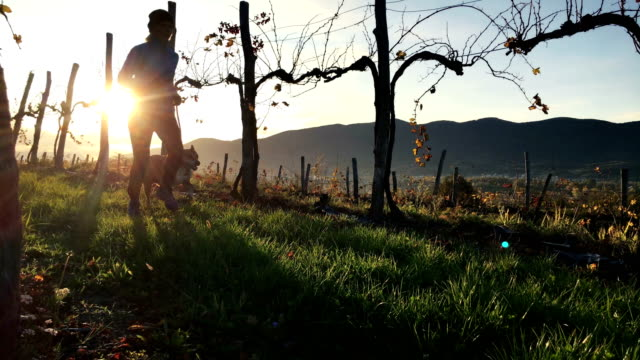 Volwassen vrouw uitgevoerd door middel van wijngaarden bij zonsopgang