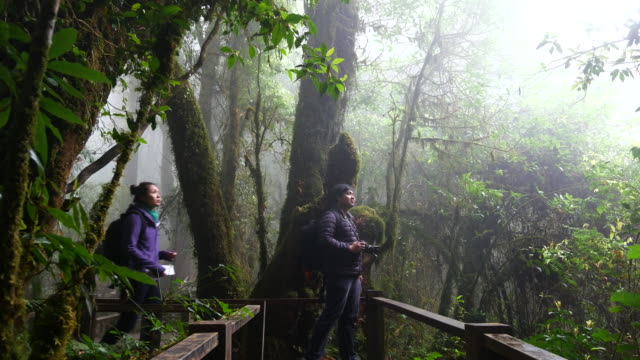 Adventure Traveler walking through and take photos the tropical forest