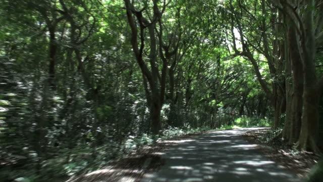 Avventura Percorrere impressionante viale di alberi calvaria