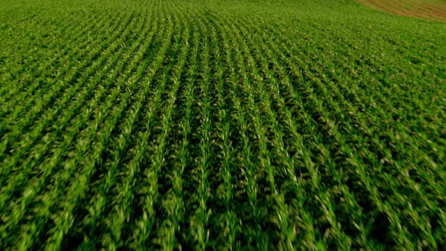 Aerial aircraft point of view over cultivated fields / Iowa