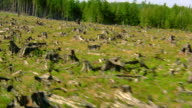 Aerial aircraft point of view over deforested hillside with tree stumps to forest / Olympic Peninsula