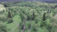 4K Aerial Aspen Tree Forest fly around 2 Drone Aerial View