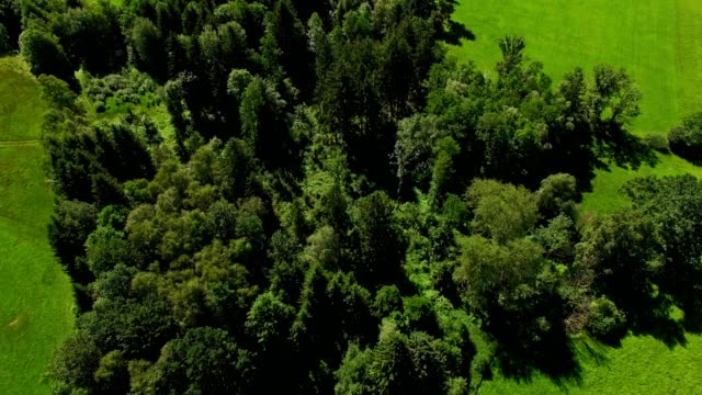 Aerial: Bavarian forests in summer
