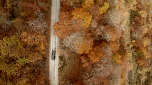Aerial birds eye view of a car driving in a country road trought the forest in autumn