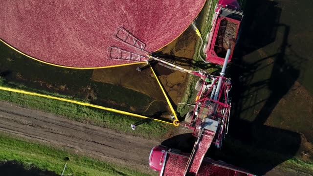Aerial bird'seye view of cranberry bog during harvest as truck gathers cranberries at Cutler Cranberry in Camp Douglas Wisconsin on Wednesday Oct 18...