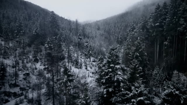 Aerial drone footage of forest and mountains in winter, Kniebis, Black Forest, Germany