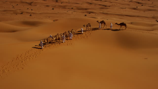 Aerial drone of Arab males with desert camels