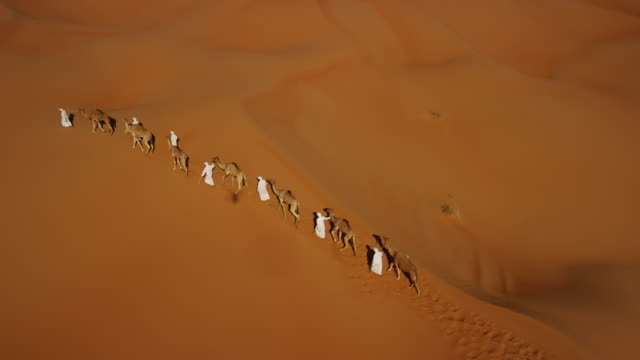 Aerial drone of camels being led by handlers