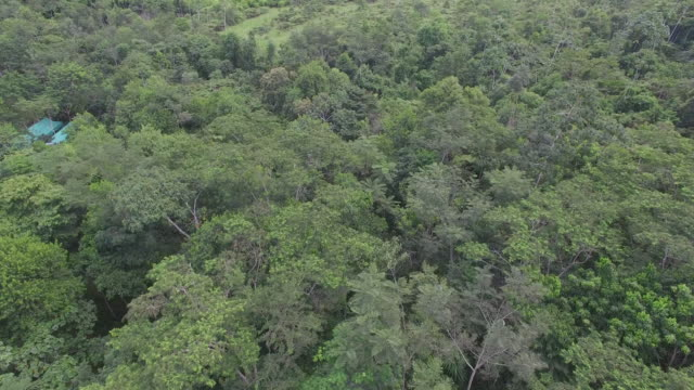 Aerial drone view over rainforest