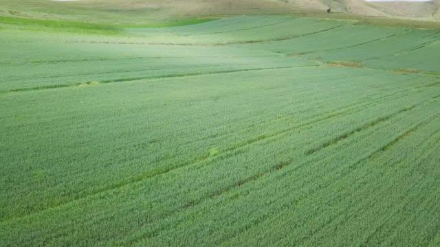 Aerial farm fields