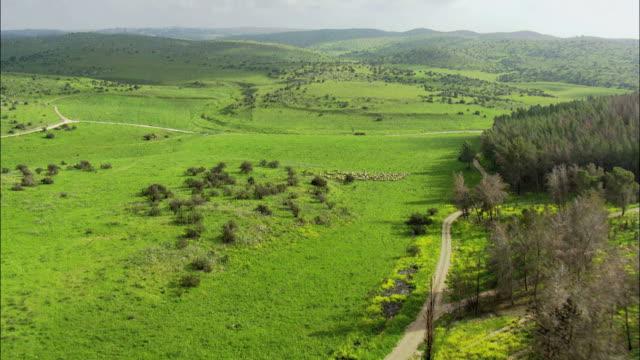 Aerial flight over flock of sheep running together, Negev, Israel