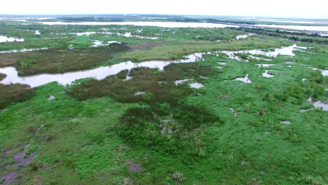 Aerial: Flying Over Swamp River Tributary that flows into the Gulf of Mexico