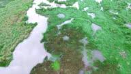 Aerial: Flying Over Swamp