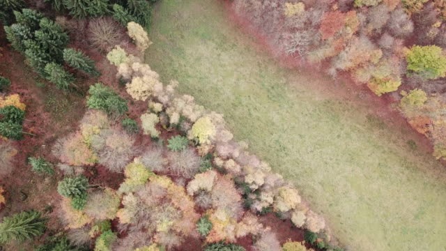 Aerial footage of autumn forest directly from above