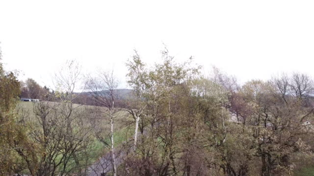 Aerial footage of the trees and road
