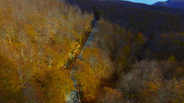 Aerial footage recorded with drone flying over mountain road in the stunning forest with autumn colors in the Montseny mountain a beautiful huge land covered with trees and high mountains close to Barcelona city.