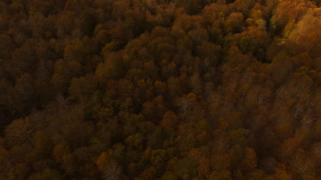 Aerial footage recorded with drone flying over the stunning forest with autumn colors in the Montseny mountain a beautiful huge land covered with trees and high mountains close to Barcelona city.