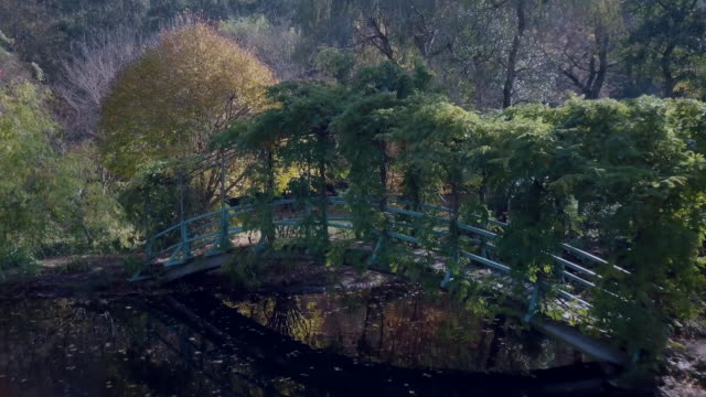 Aerial low angle view of a lake, trees and a bridge in autumn, Victoria, Australia