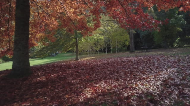 Aerial low angle view of colourful autumn leaves and flying under a tree