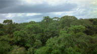 Aerial low over canopy of equatorial forest / French Guiana