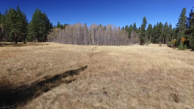Aerial Low to Rise: Meadow, Aspen Trees, Lake