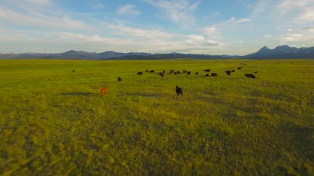Aerial Montana landsbygden