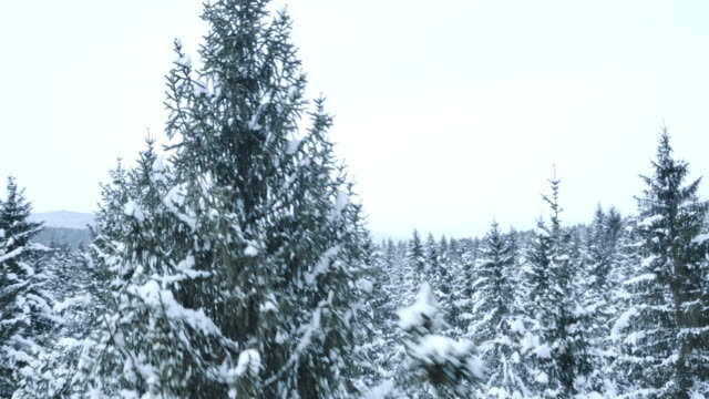 Aerial of a snow covered forest