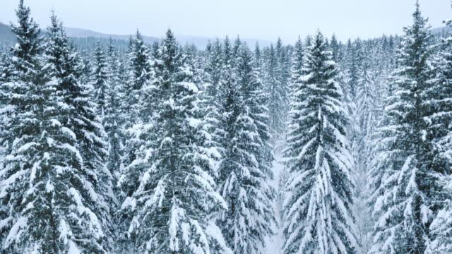 Antenne van een winter bos bedekt met sneeuw