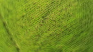 Aerial of Corn field in Virginia ready for harvest