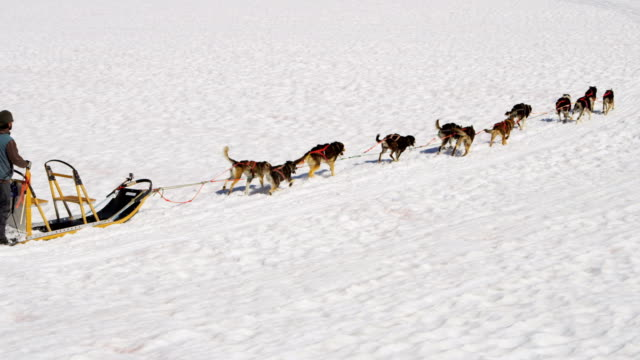 Aerial of Husky dogsledding Alaska, USA
