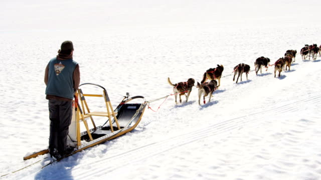 Aerial of Husky dogsledding Alaska