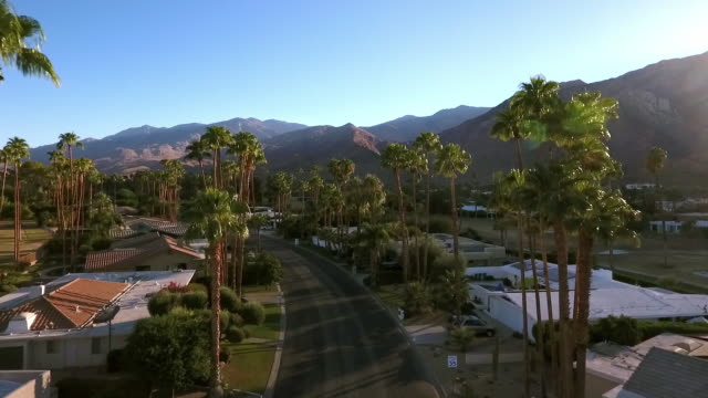 WS aerial of residential street lined by tall palm trees in historic Indian Canyons neighborhood