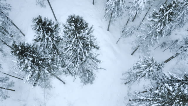 Aerial of snow capped forest trees