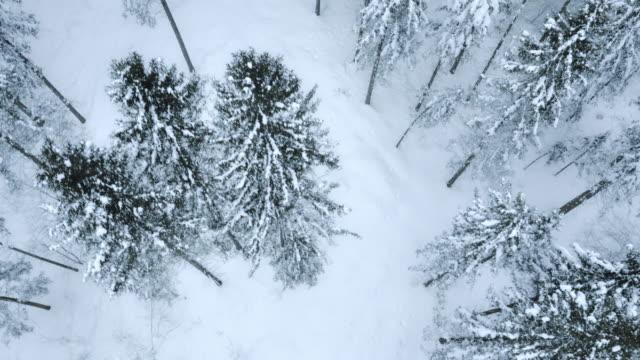 Veduta aerea di alberi della foresta innevate