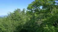 Luftaufnahme auf Baum in einem riesigen forest