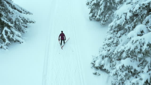 Aerial of young woman cross country skiing amongst trees