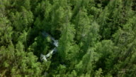 Aerial over crashed plane in forest / British Columbia, Canada