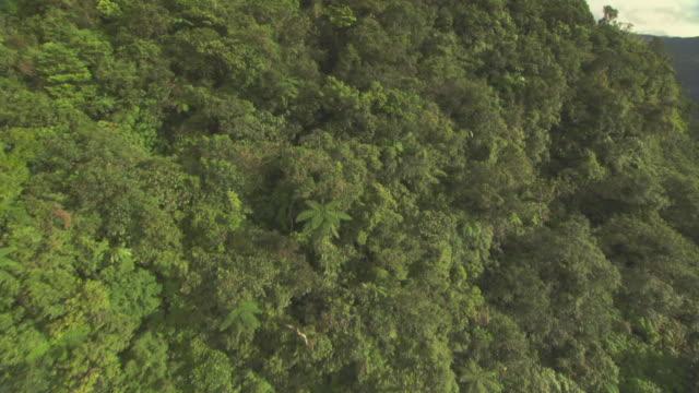 Aerial over forested hillside.