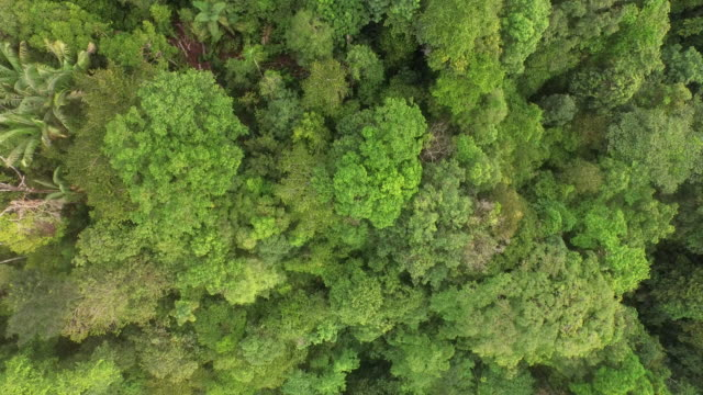 Aerial over jungle of Chocó, Colombia