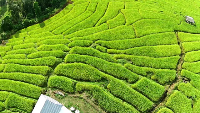 Aerial over terraced rice paddies