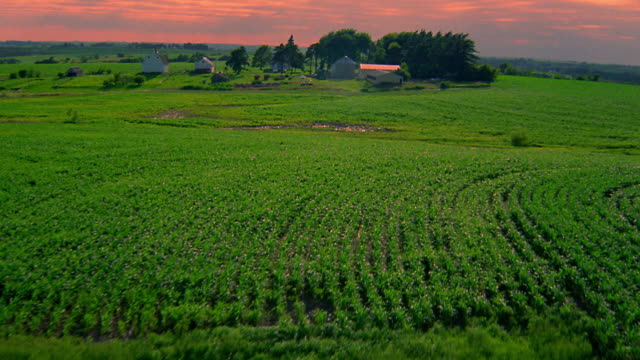 Aerial point of view away from farm and over cultivated fields / Iowa