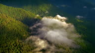 Aerial point of view over forest-covered mountain range with low hanging clouds / Olympic Peninsula, Washington