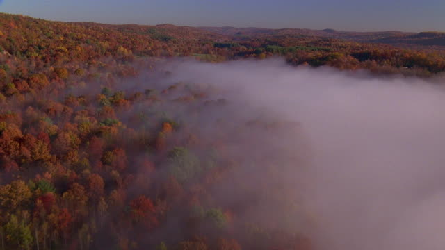Aerial point of view over trees and fog in autumn / New England