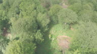 Aerial reveal of clearing in forest