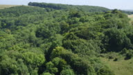 Aerial reveal of woodland on South Downs