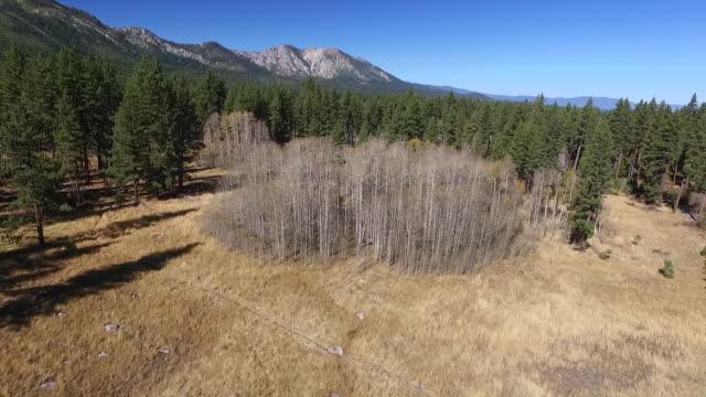 Aerial Reverse Rise Up: Meadow, Aspen Trees, Fallen Leaf Lake